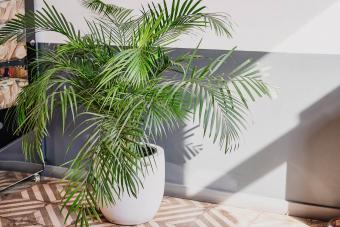 Indoor Tropical Houseplants