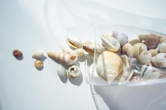Ocean shells in glass