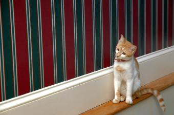 Pet-Friendly Decorating: Keeping Your Furry Friends Safe