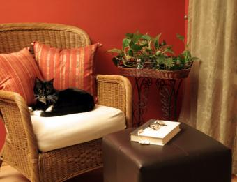 Pet-Friendly Interior Design for Loving (Yet Cautious) Owners