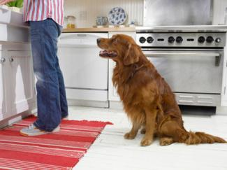 washable kitchen rugs. Washable Kitchen Rugs