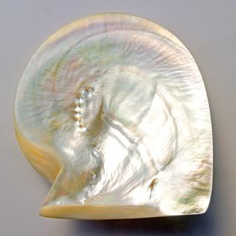 Pearls shell, riches, mother of pearl