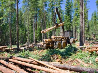 https://cf.ltkcdn.net/jobs/images/slide/129634-800x600r1-logging.JPG