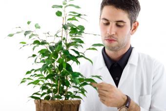 https://cf.ltkcdn.net/jobs/images/slide/131361-847x567r1-botanist_at_work.JPG