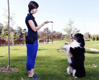 Woman training dog outdors