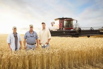Two generations of farmers in wheat field