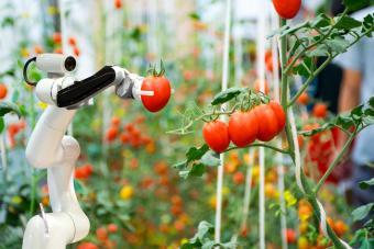 Robotic Arm Holding Tomato