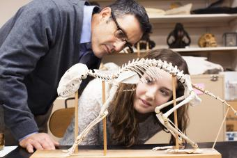 Teacher and student working in natural history museum