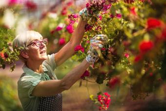 Senior woman gardener working in Garden center