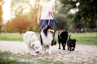 Dog walker enjoying outdoors in park with group of dogs