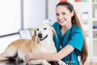 Young veterinary technician