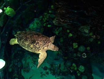 https://cf.ltkcdn.net/jobs/images/slide/33352-800x615-wildlife_biology.jpg