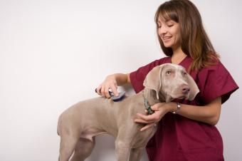 https://cf.ltkcdn.net/jobs/images/slide/33358-849x565-dog_groomer.jpg