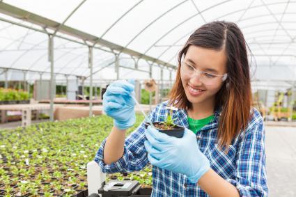 Agricultural botanist testing soil samples