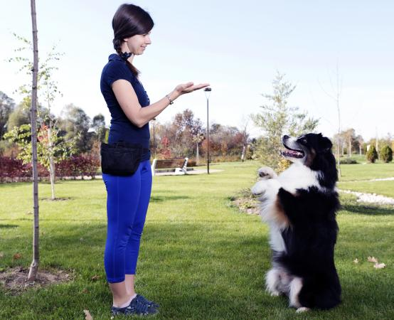 Woman training dog outdors