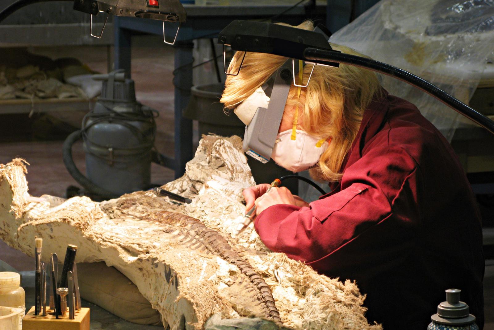 Paleontologist Working on Dinosaur Fossil