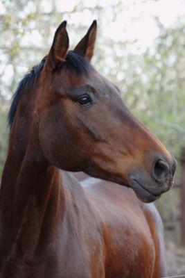 Equestrian Employment