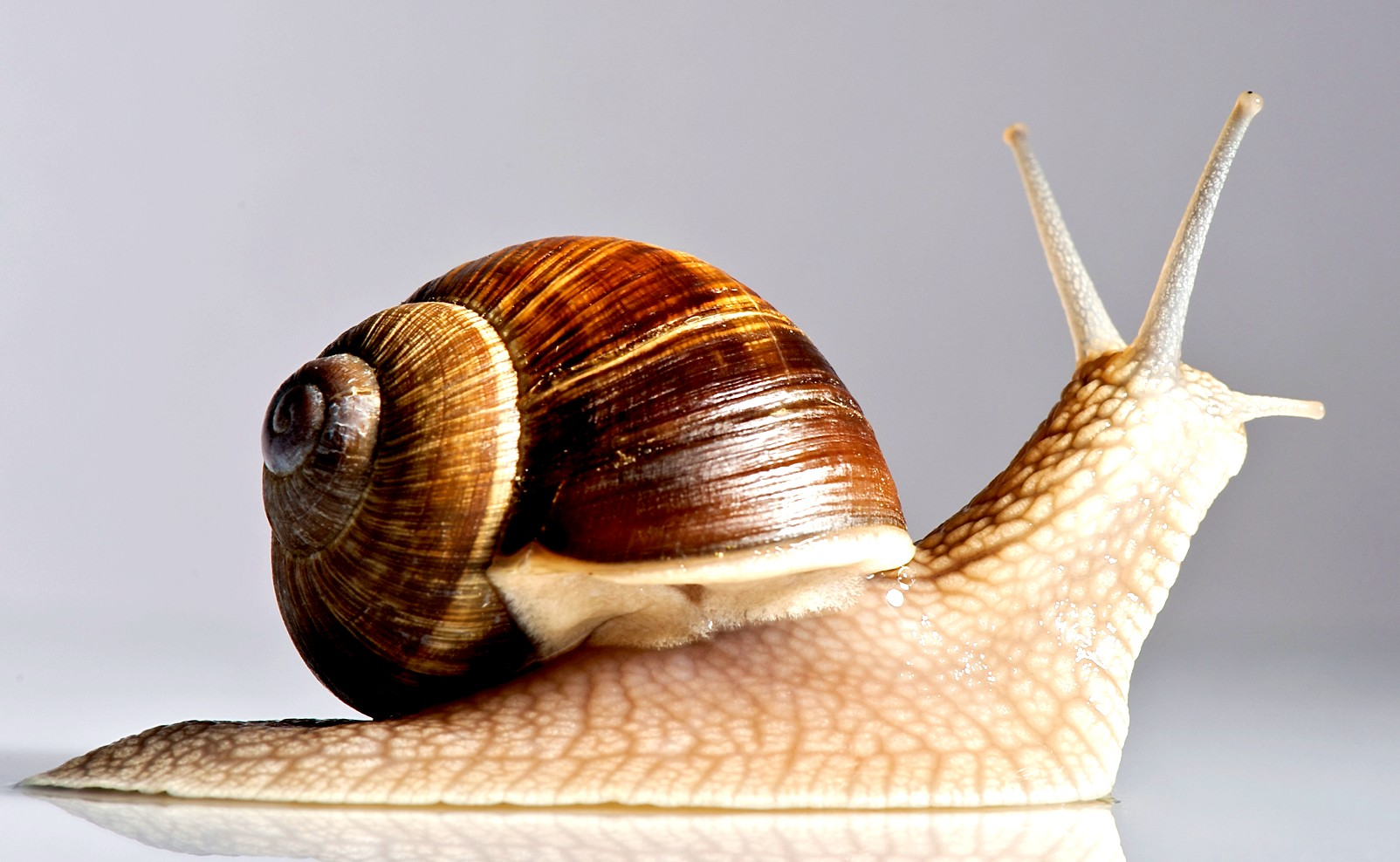 Snail Facts for Kids | LoveToKnow
