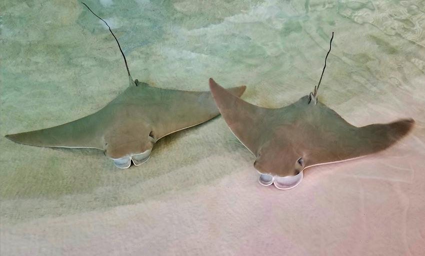 https://cf.ltkcdn.net/kids/images/slide/251685-850x513-Baby_Stingrays.jpg