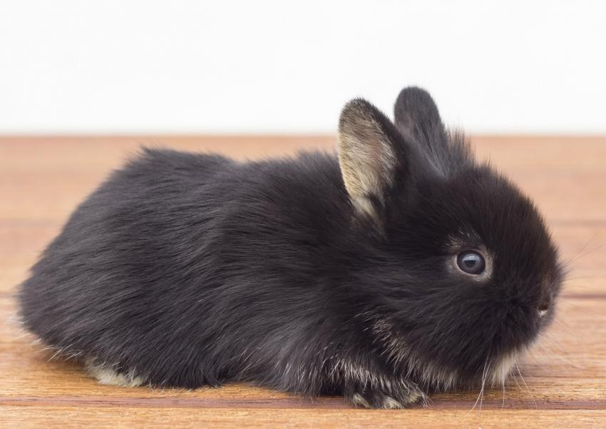 https://cf.ltkcdn.net/kids/images/slide/251696-850x601-Baby_bunny_rabbit.jpg