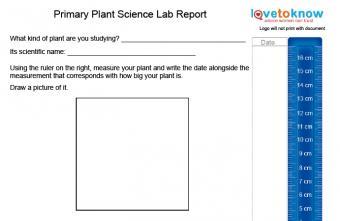 plant science lab report