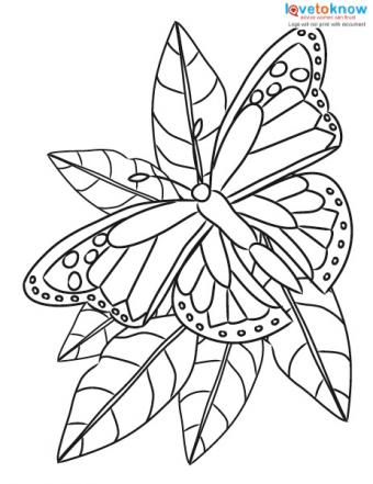 Free printable butterfly sitting on a flower coloring page