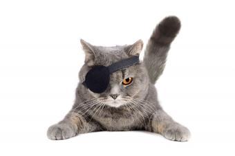 https://cf.ltkcdn.net/kids/images/slide/191363-850x567-Pirate-Cat.jpg