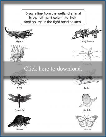 Printable Wetlands Matching Worksheet