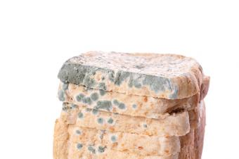 Bread With Mold