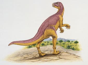Xiaosaurus in the forest