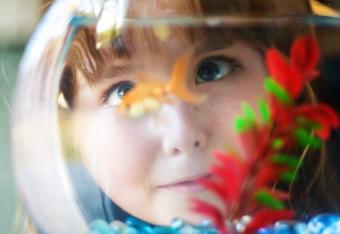 girl looking at goldfish