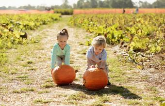 Brother and sister in pumpkin field