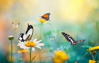 Spring meadow with butterflies