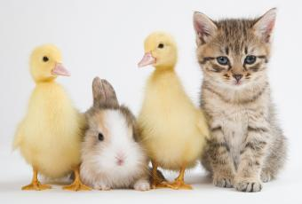 https://cf.ltkcdn.net/kids/images/slide/251592-850x575-Baby_Animals.jpg
