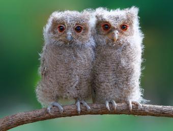 https://cf.ltkcdn.net/kids/images/slide/251593-850x643-Baby_Owls.jpg