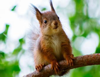 https://cf.ltkcdn.net/kids/images/slide/251594-850x655-Baby_Squirrel.jpg