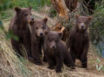 https://cf.ltkcdn.net/kids/images/slide/251599-850x635-Baby_Bear.jpg
