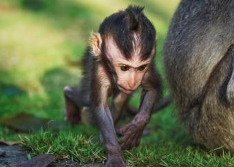 https://cf.ltkcdn.net/kids/images/slide/251615-850x605-Baby_Monkey.jpg