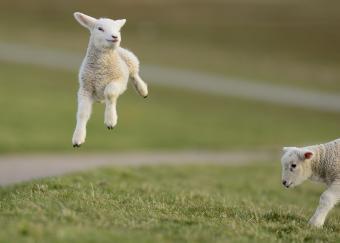 https://cf.ltkcdn.net/kids/images/slide/251655-850x608-Baby_Lamb.jpg