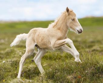 https://cf.ltkcdn.net/kids/images/slide/251677-850x682-Baby_Horse.jpg