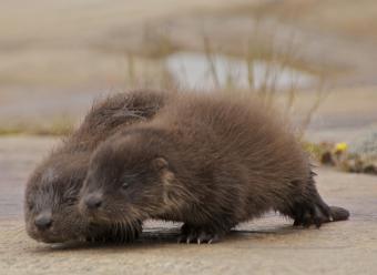 https://cf.ltkcdn.net/kids/images/slide/251684-850x621-Baby_Otter.jpg