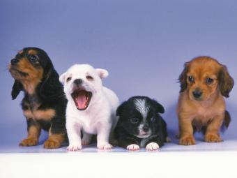 https://cf.ltkcdn.net/kids/images/slide/251688-850x638-Baby_Puppies.jpg