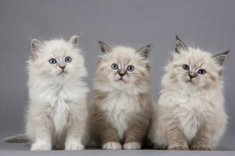 https://cf.ltkcdn.net/kids/images/slide/251691-850x565-Baby_Kitten.jpg
