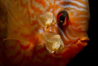 https://cf.ltkcdn.net/kids/images/slide/251745-850x573-Baby_Fish.jpg
