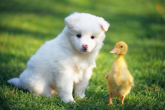 https://cf.ltkcdn.net/kids/images/slide/252445-850x567-puppy-chick.jpg
