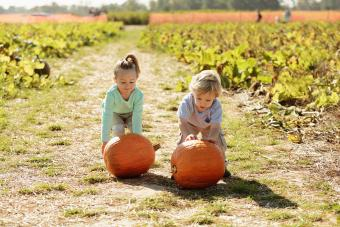 Brother and sister in pumpkin field rolling pumpkins