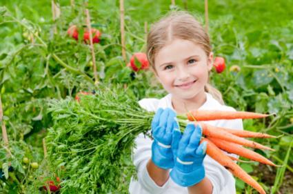 gardning carrots