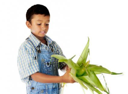 Boy Husking Corn