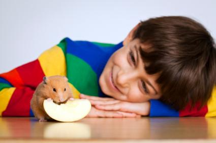 boy watching mouse eat apple
