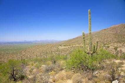 The Sonoran Desert